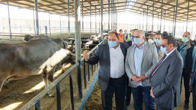 Photo of وزير الزراعة ومحافظ البحيرة يتفقدان محطة الإنتاج الحيواني وتصنيع الألبان بوادي النطرون
