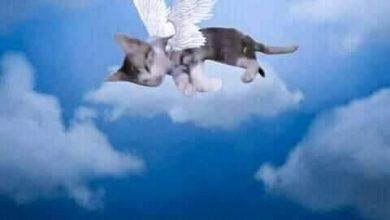 صورة تفاصيل جديدة تكشف عن قاتلات القطة في البث المباشر