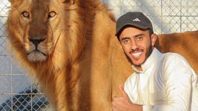 فر من قفصه.. أسد يفترس سعودياً في حديقة منزله في الرياض